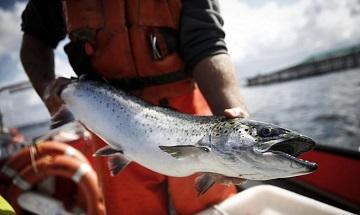 Роль рыбы в норвежском языке