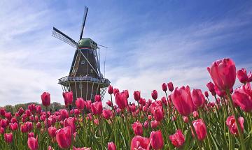 Интересные факты о нидерландском языке
