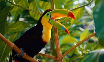 Почему страна Коста-Рика так называется?