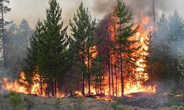 Российские лингвисты выбрали словом года «пожар»